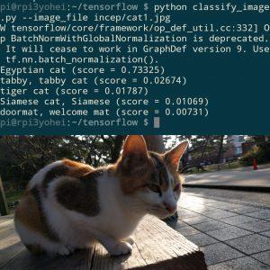 cat-tensor